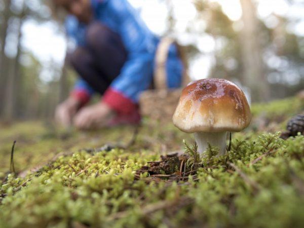 Местность богата грибами