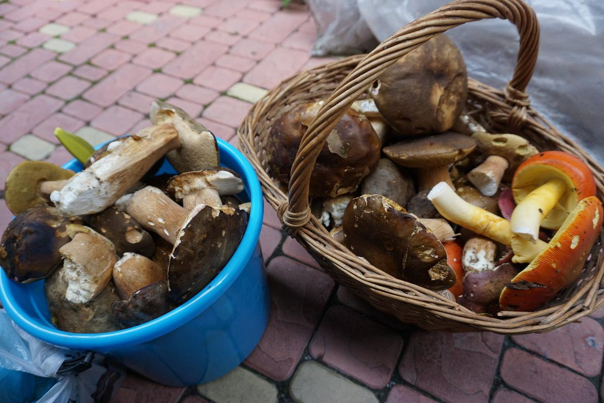 какие грибы искать фото 2
