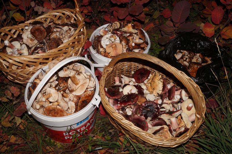 грибы Кубани осень и зима 2020 года фото 1