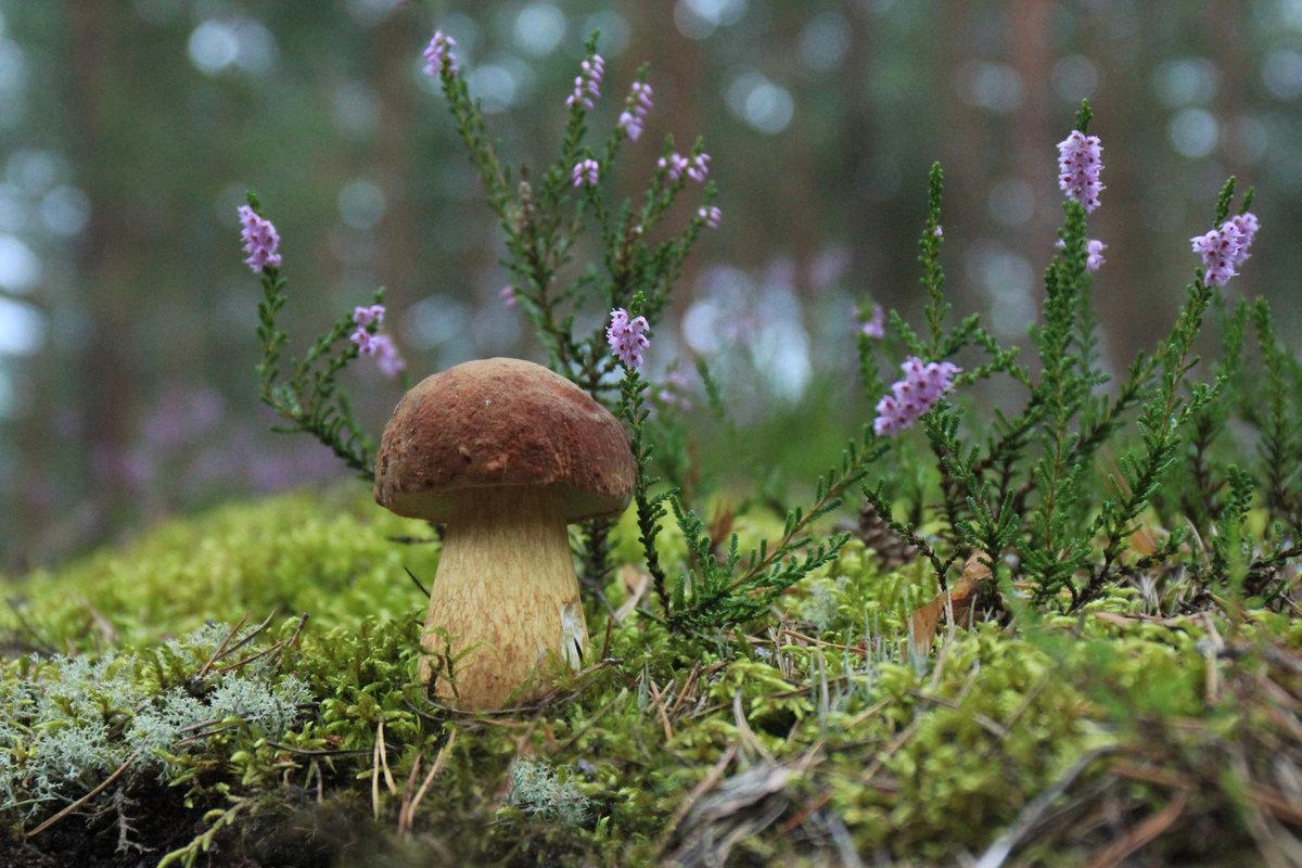 есть ли грибы, что пишут на форуме фото 2