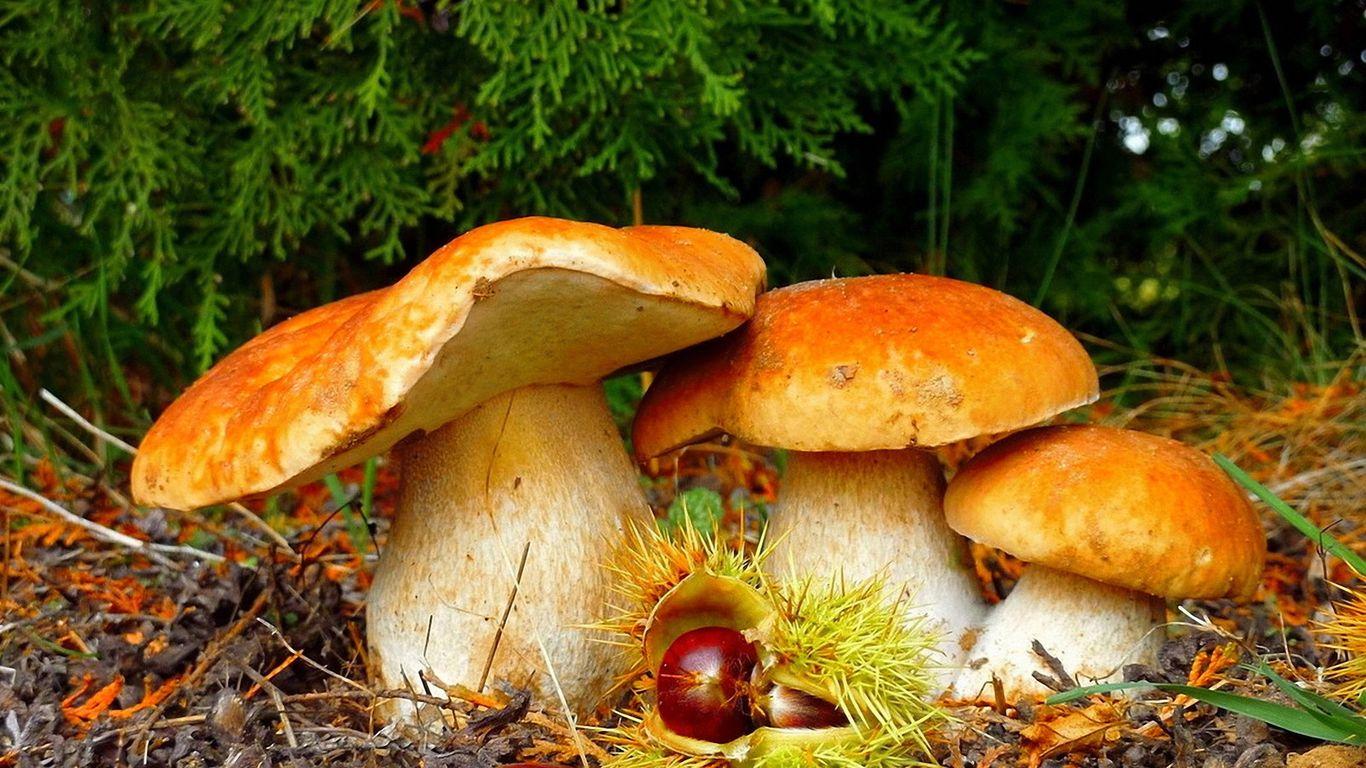 тихая охота на грибы в сентябре и октябре 2020