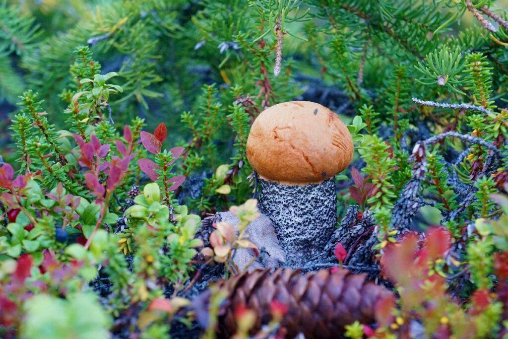 вышеперечисленных регалий, фото грибов в центральной россии зенера онлайн тест