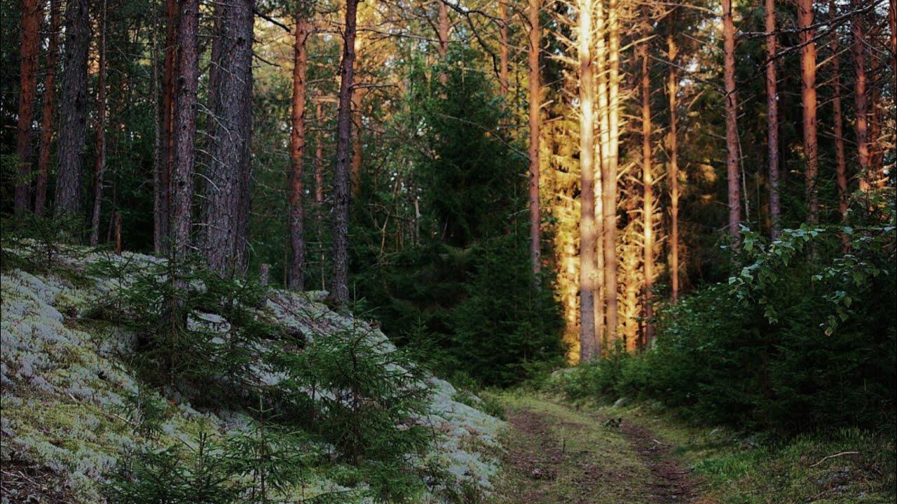 грибные места в Ленинградской области 2020 сейчас фото 1
