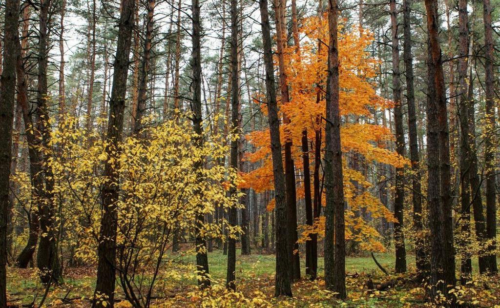 грибные места в Ленинградской области 2020 сейчас фото 3