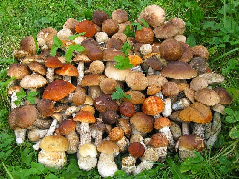 где искать условно- и съедобные грибы фото 2