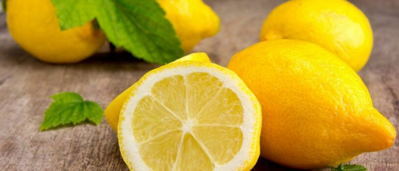 Технология выращивания лимонов в теплице