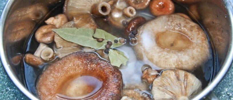 Рецепты приготовления маринованных волнушек на зиму