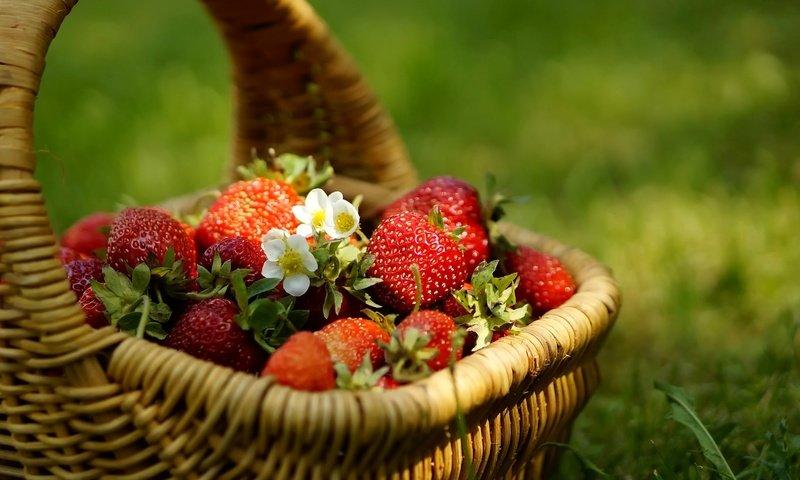 сбор урожая садовых и лесных ягод 2020