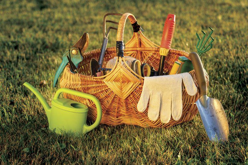 инструменты для сбора ягод