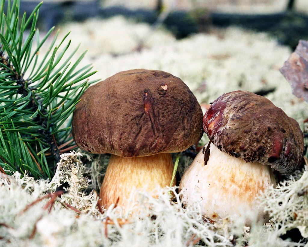 самые популярные грибы 2020 фото 1