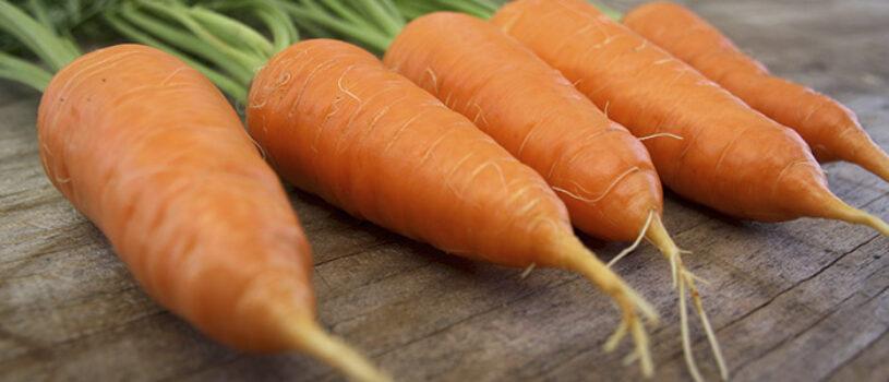 Морковь сорта Алтайская лакомка