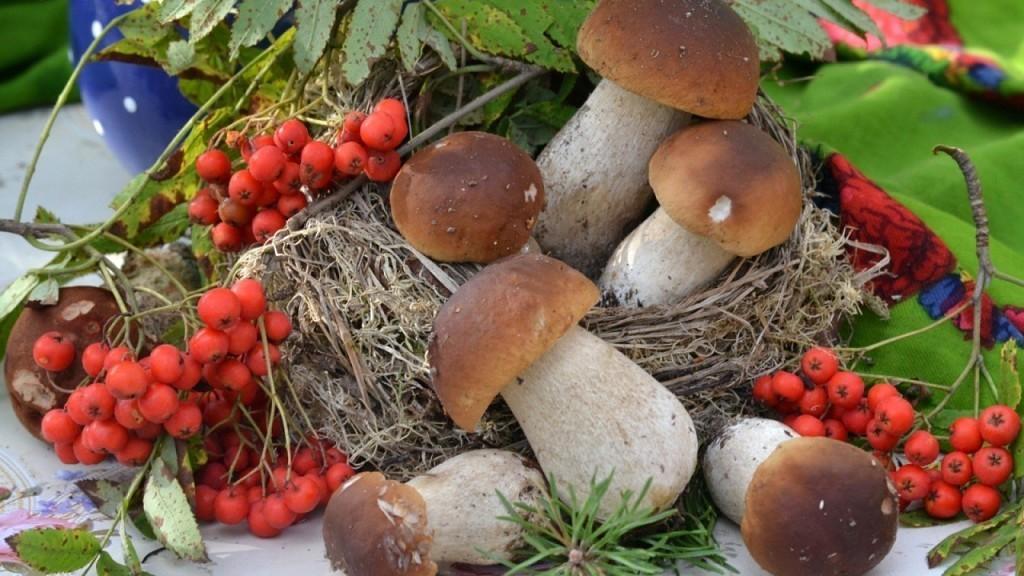осенние виды грибов в 2020 году