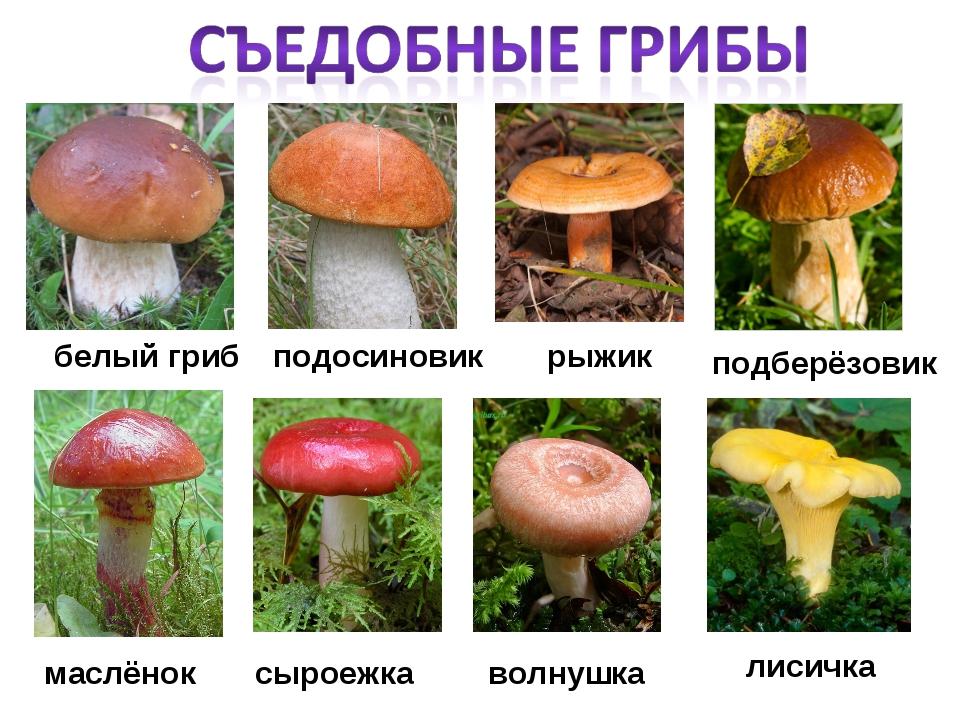 Картинки с грибами съедобными и ядовитыми
