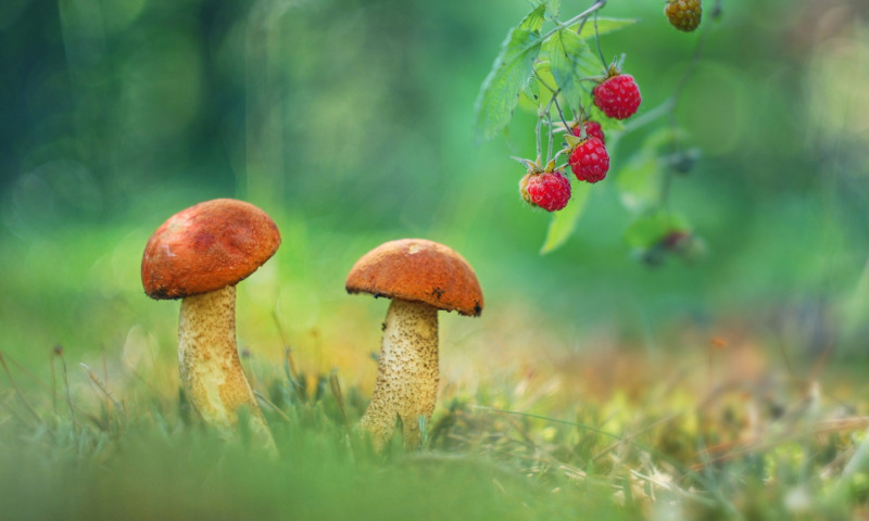 грибы и грибные места в Севастополе 2020