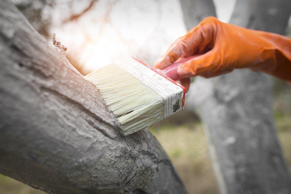 побелка деревьев, зачем нужна