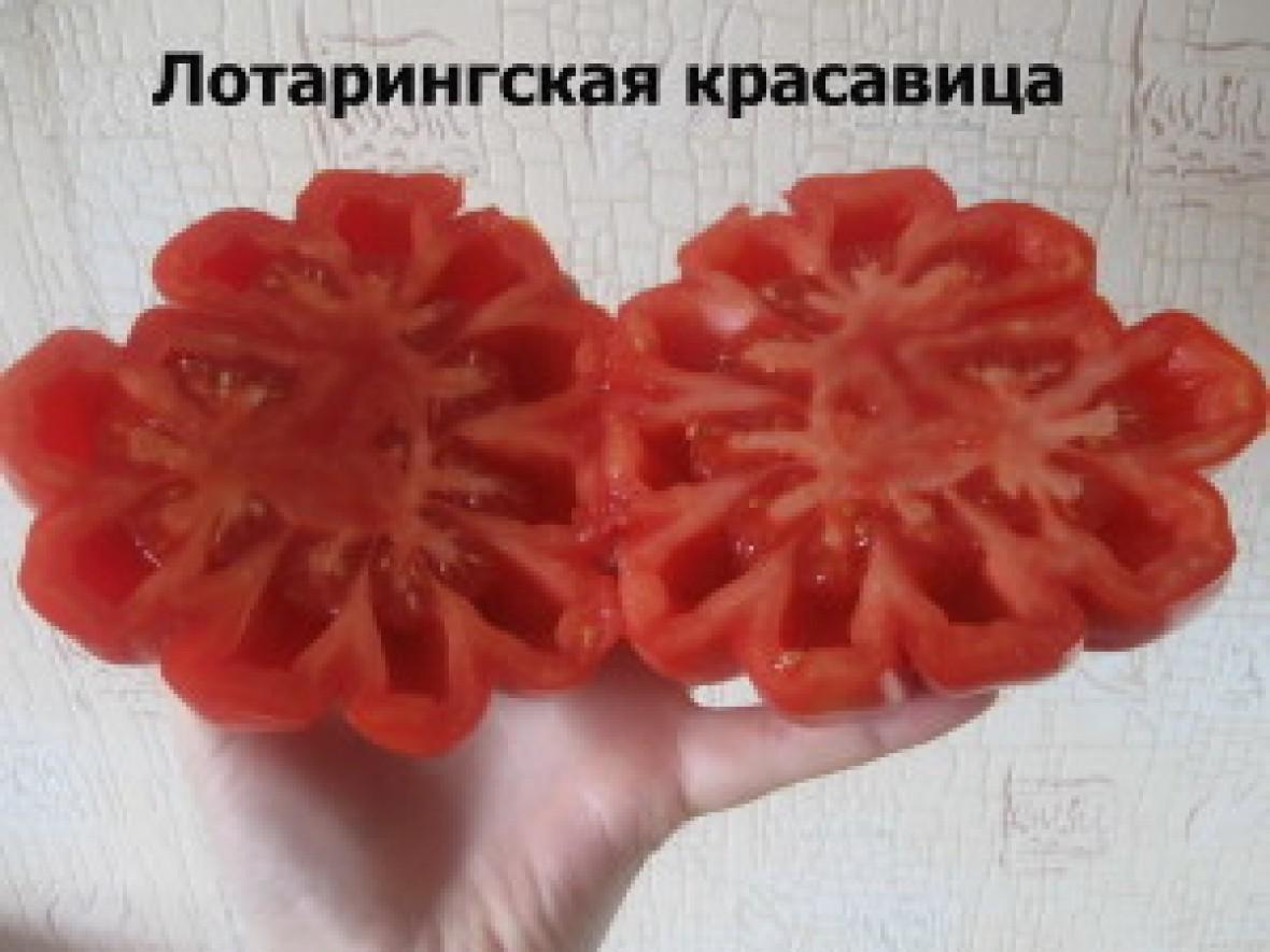 лучшие по урожайности сорта томатов
