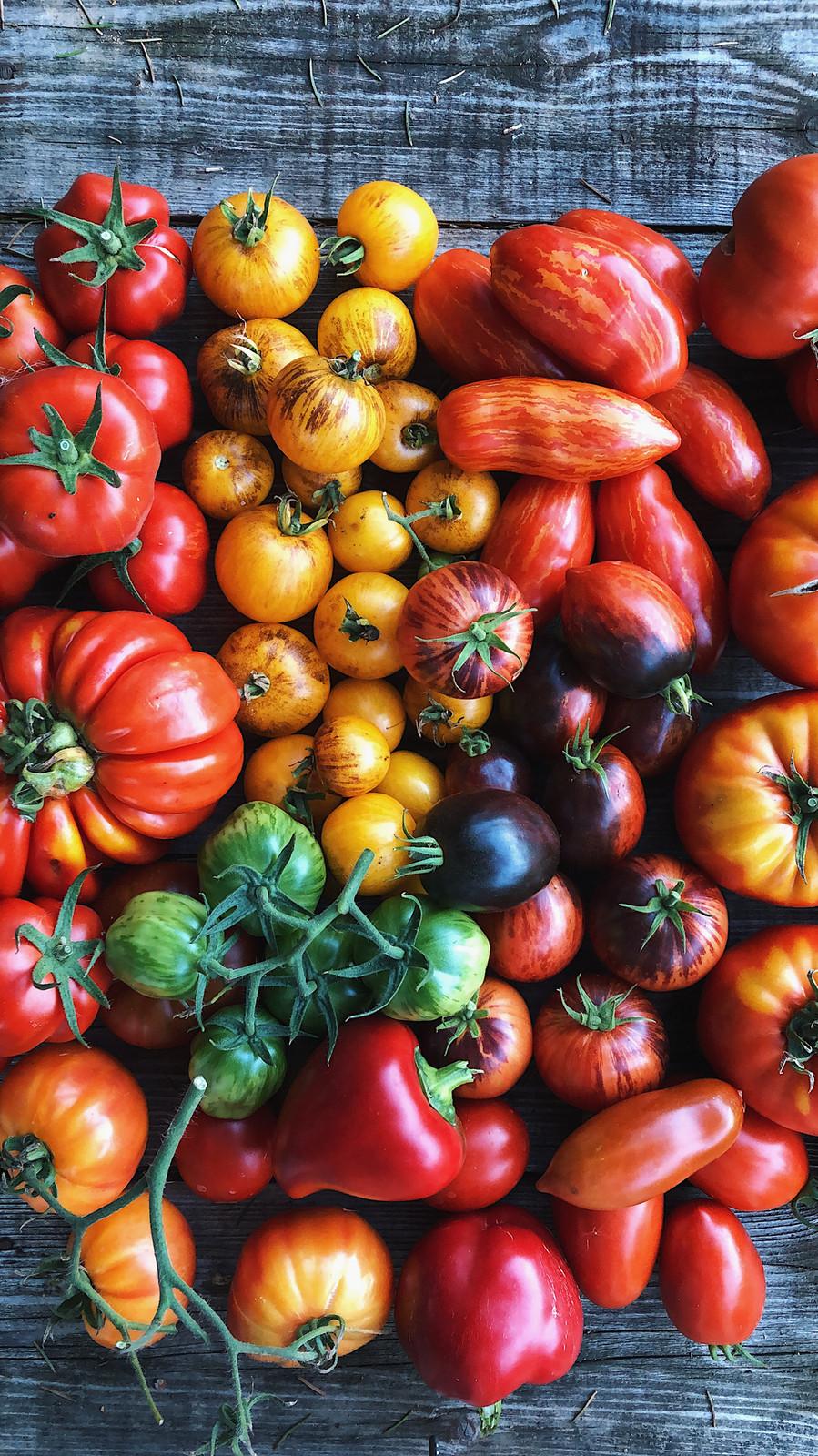 лучшие коллекционные сорта томатов 2020 по отзывам