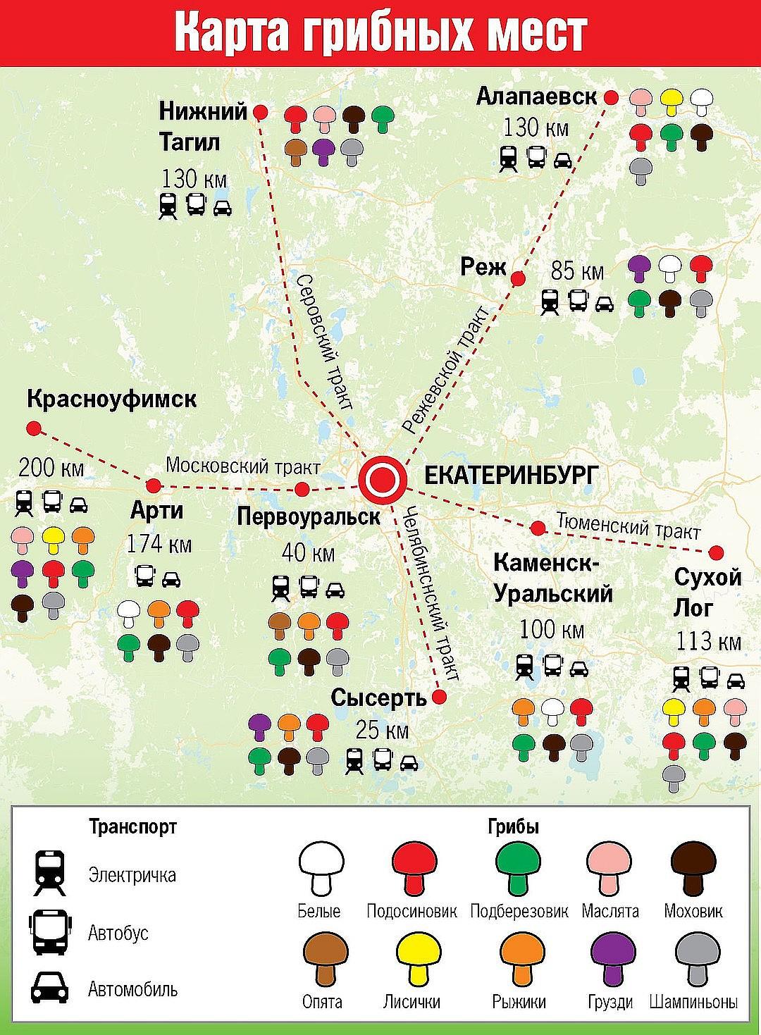 где растут в 2020 году и когда собирать опята в Свердловской области