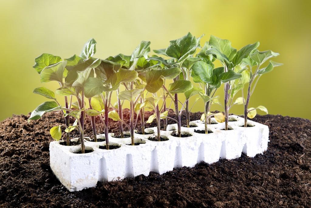 rак посадить баклажаны на рассаду в 2020 году