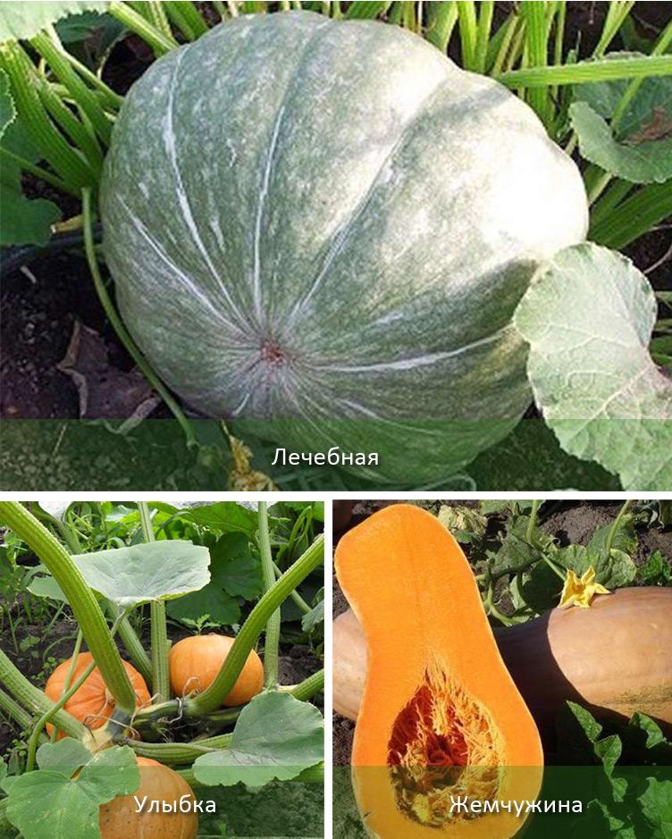 реальные отзывы садоводов фото 2