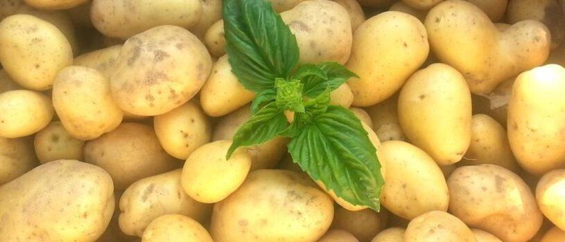 Прогноз цен на картофель в 2020 году