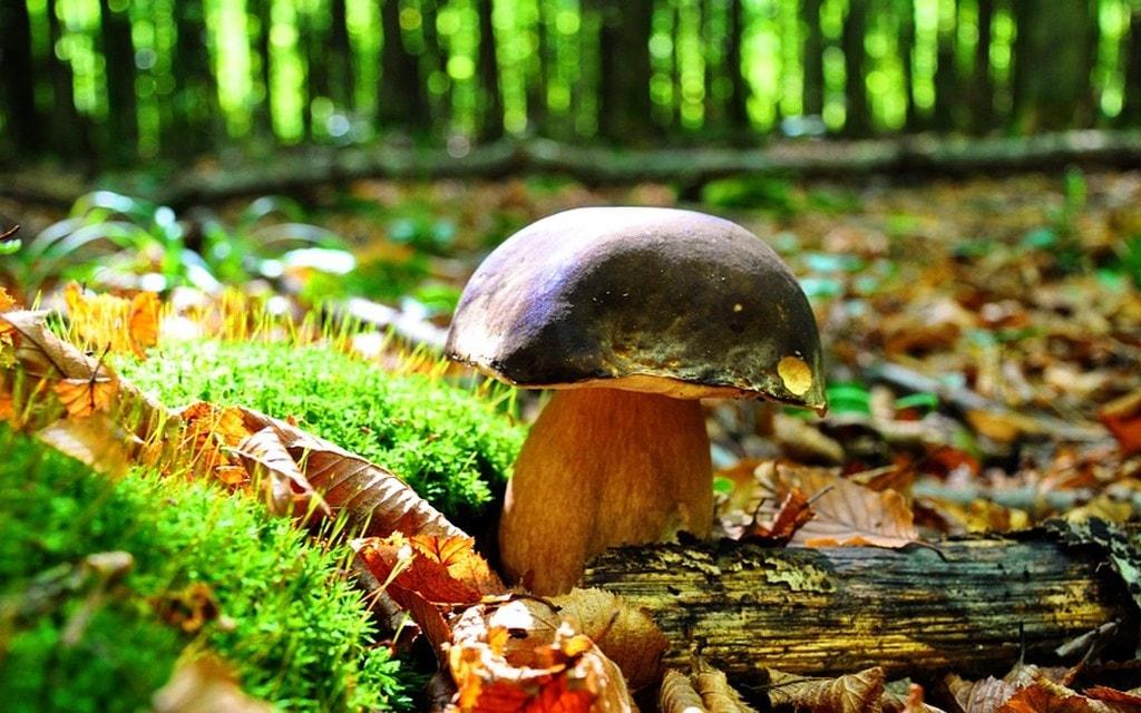 какие грибы растут в Ростовской области и как их найти фото 1