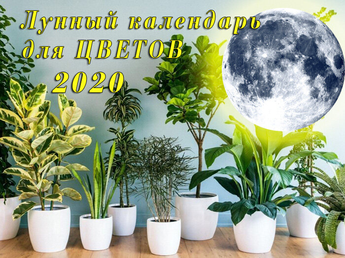 новолуние и полнолуние, влияние на комнатные растения (цветы) в марте 2020 года фото