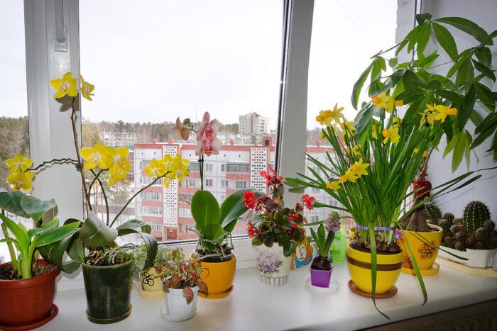 полноценный уход за комнатными растениями в марте 2020 фото