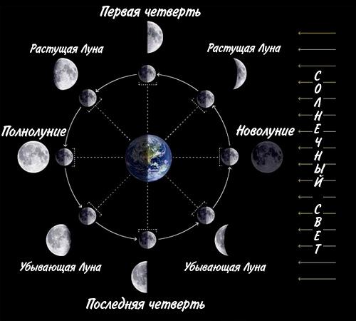лунный календарь для посадки бархатцев на рассаду в 2020 году фото