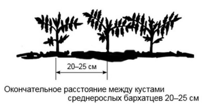 схема посадки фото