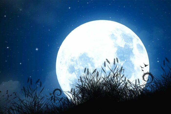 благоприятные дни для посадки фасоли по Лунному календарю в 2020 году фото