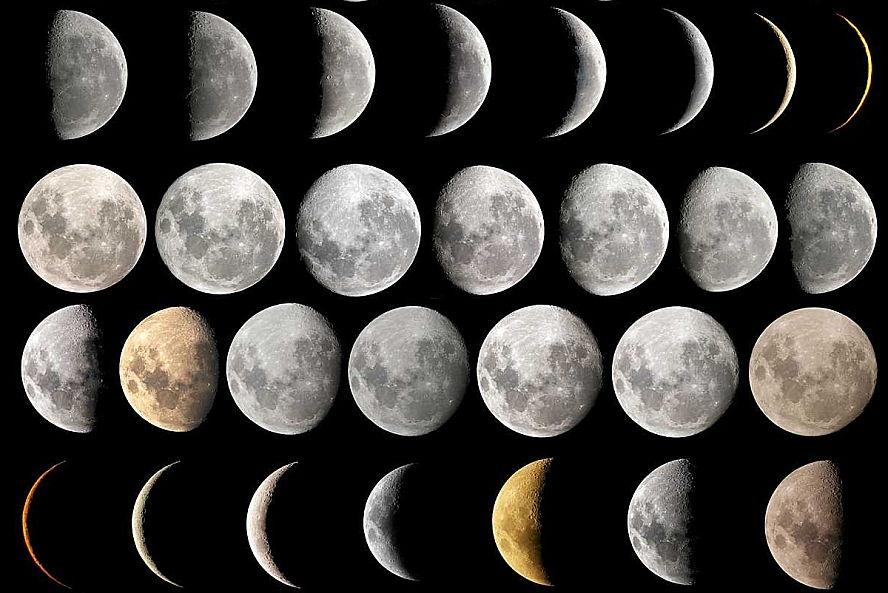 посадка пекинской капусты по Лунному календарю фото
