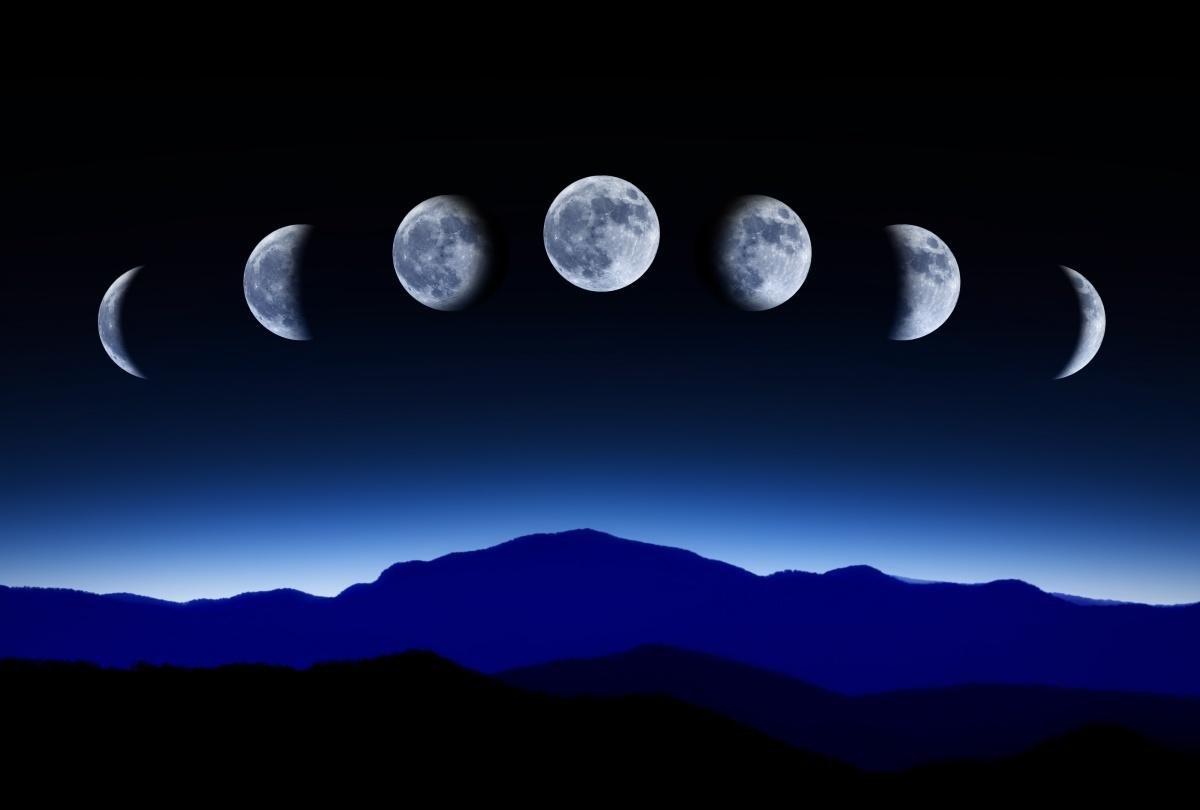 посадка базилика по Лунному календарю в 2020 году фото