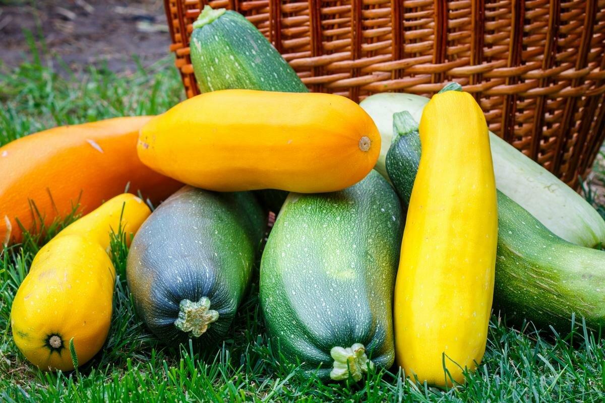 выращивание кабачков, важные аспекты фото 1