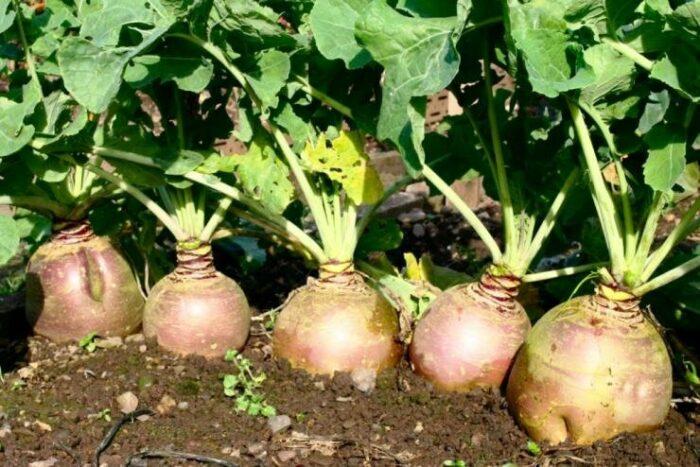 фото урожая 2
