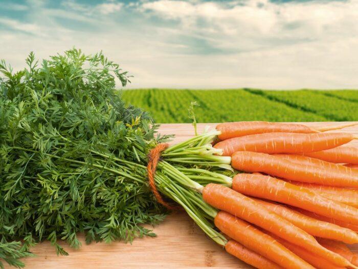 самые благоприятные дни (числа) для посадки моркови в 2020 году фото