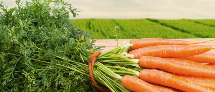 Благоприятные дни для посева и посадки моркови в 2020 году