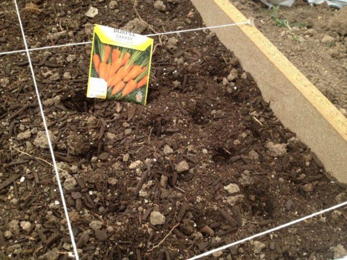 посадка моркови весной фото