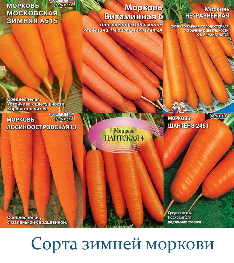 как выбрать сорта моркови фото