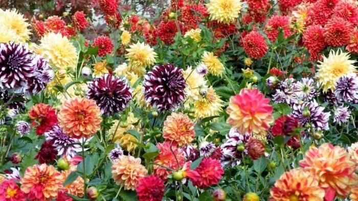 какие цветы посеять на рассаду в марте 2020 года фото