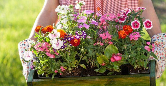 посев и посадка цветов в апреле 2020 года, наиболее благоприятные дни фото