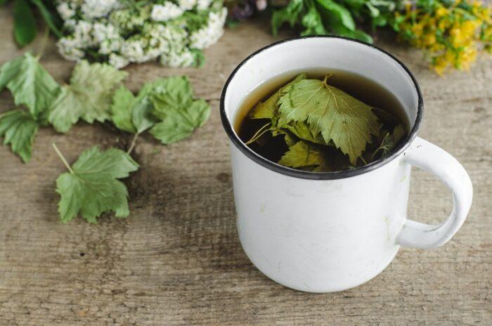 березовый квас с листьями и веточками смородины фото