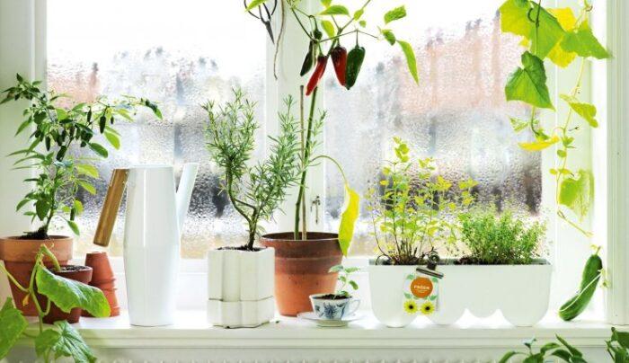 уход за комнатными растениями в апреле 2020 года фото