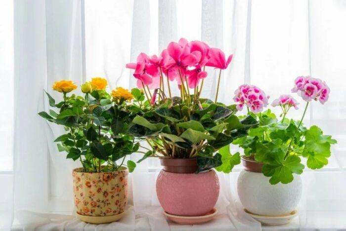лунный календарь для комнатных растений и цветов на апрель 2020 года фото