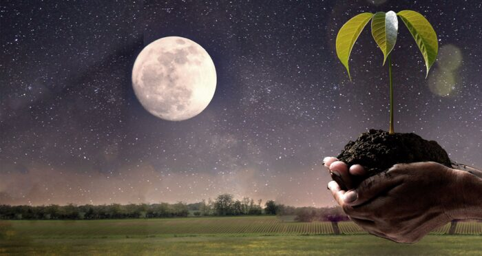 влияние фаз Луны на растения фото