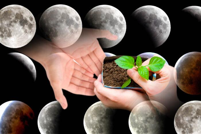лунный календарь садовода и огородника на март 2020 года фото