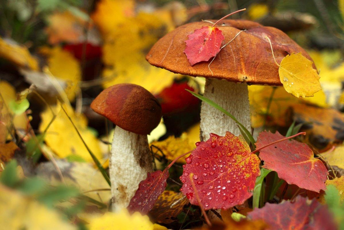 Грибы и осень картинки