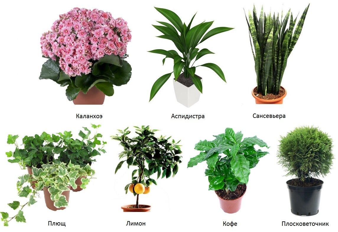 Комнатное растение по фото