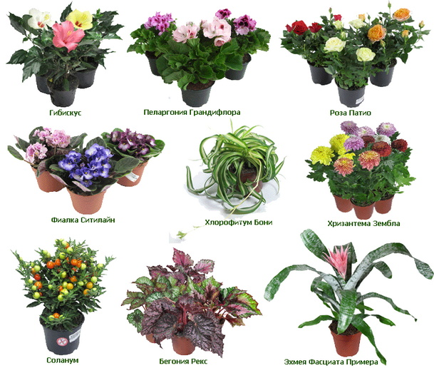 Название комнатных растений и картинки