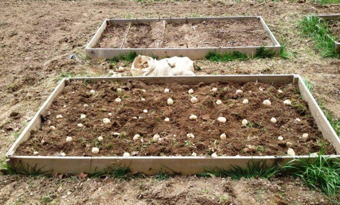 рекомендации в период выращивания фото